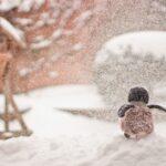 Nature Penguin Winter Snow  - Andre_Grunden / Pixabay